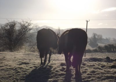 Horses in permaculture